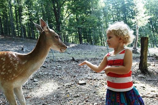 Śląskie atrakcje - Leśny Park Niespodzianek