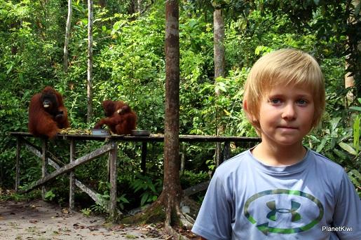 1 Tanjung Puting Borneo podróże z dzieckiem (13)