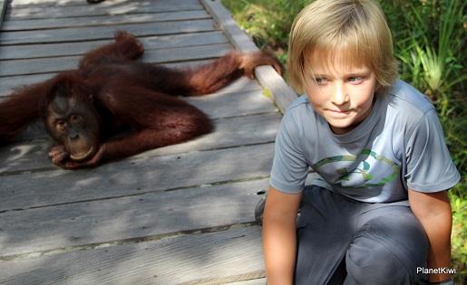 1 Tanjung Puting Borneo podróże z dzieckiem (20)