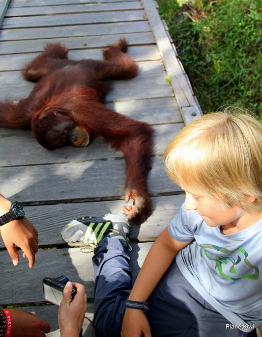 1 Tanjung Puting Borneo podróże z dzieckiem (21)