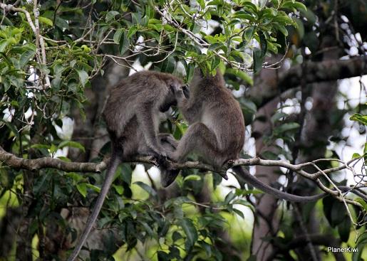 1 Tanjung Puting Borneo podróże z dzieckiem (23)