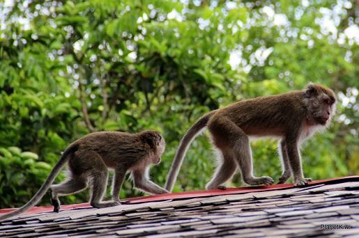 1 Tanjung Puting Borneo podróże z dzieckiem (26)