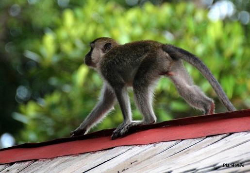 1 Tanjung Puting Borneo podróże z dzieckiem (28)