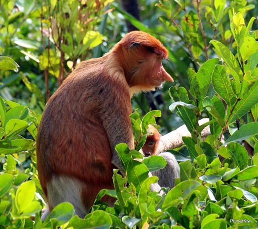 1 Tanjung Puting Borneo podróże z dzieckiem (31)
