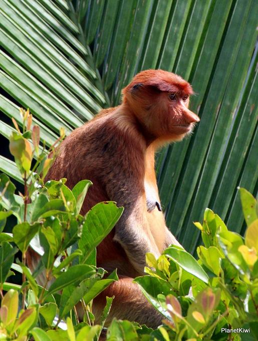 1 Tanjung Puting Borneo podróże z dzieckiem (32)
