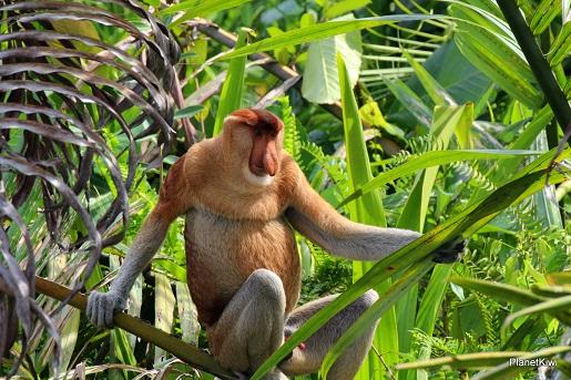 1 Tanjung Puting Borneo podróże z dzieckiem (33)