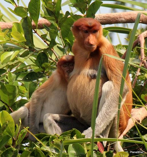 1 Tanjung Puting Borneo podróże z dzieckiem (35)