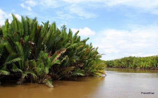 1 Tanjung Puting Borneo podróże z dzieckiem (4)