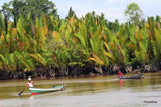 1 Tanjung Puting Borneo podróże z dzieckiem (5)