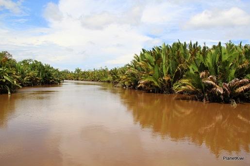 1 Tanjung Puting Borneo podróże z dzieckiem (6)