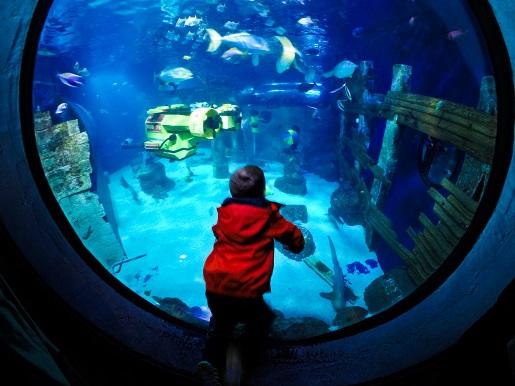 Atlantis by SEA LIFE LEGOLAND Akwarium oceanarium