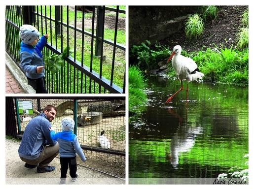 Białystok zoo - atrakcje dla dzieci 2017