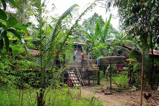 Borneo Jungle 6