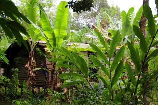 Borneo dżungla z dzieckiem opinie