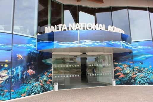 Bugibba - Akwarium Oceanarium - atrakcje dla dzieci Malta
