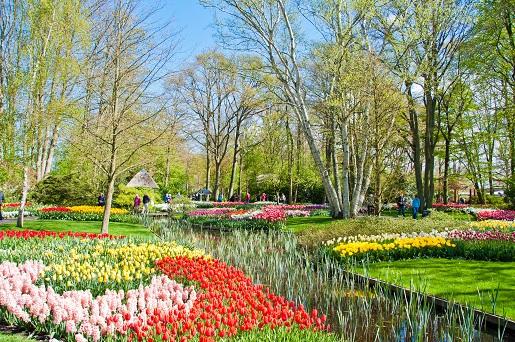 ogród botaniczny Kokenheuf Holandia opinie