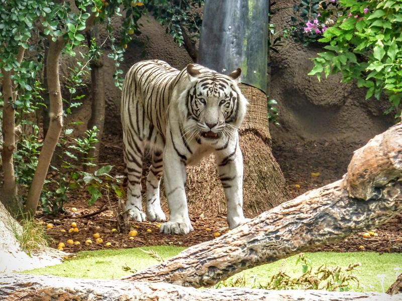 zoo Teneryfa rodzinne atrakcje