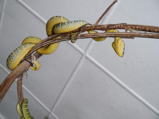 Malezja świątynia węża - atrakcje (2)