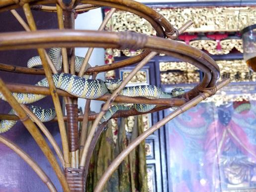 atrakcje Malezja Świątynia Węża
