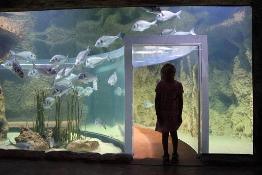 Malta z dzieckiem - Akwarium Bugibba Oceanarium