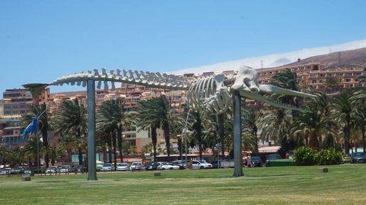 Fuerteventura rodzinne atrakcje Morro Jable