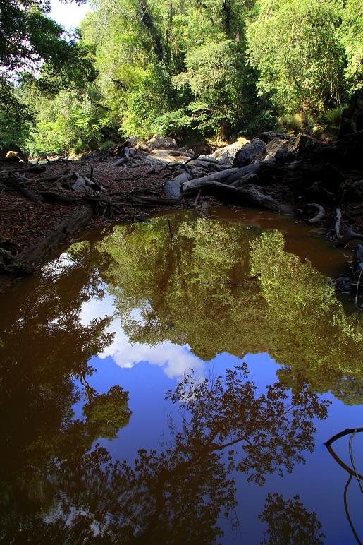 Mr.Jungle, rzeka (9)