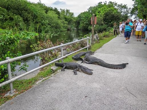 Park Narodowy Everglades Stany Zjednoczone z dzieckiem  atrakcje