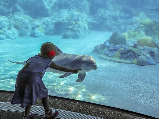 Park Rozrywki Sea World Orlando Stany Zjednoczone z dzieckiem