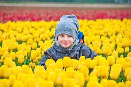 Keukenhof rodzinne atrakcje tulipany