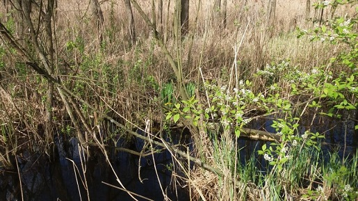Poleski Park Narodowy - Żółwie Błotne