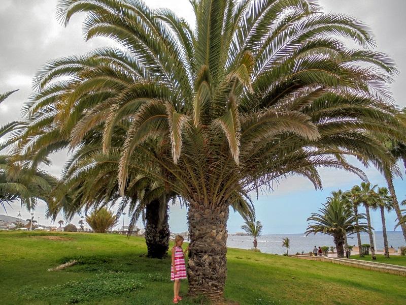 Costa Adeje z dzieckiem gdzie atrakcje opinie wakacje