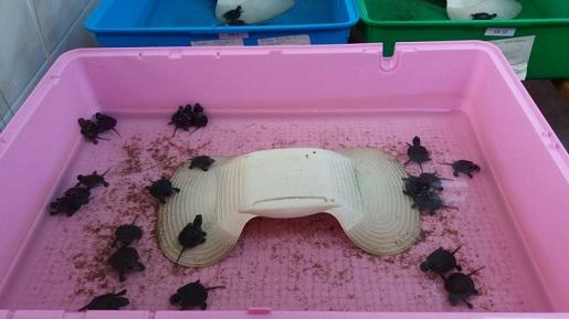 Urszulin-żółwie błotne Poleski Park Narodowy