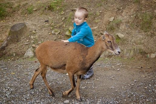 Ustroń Leśny Park Niespodzianek - atrakcje dla dzieci