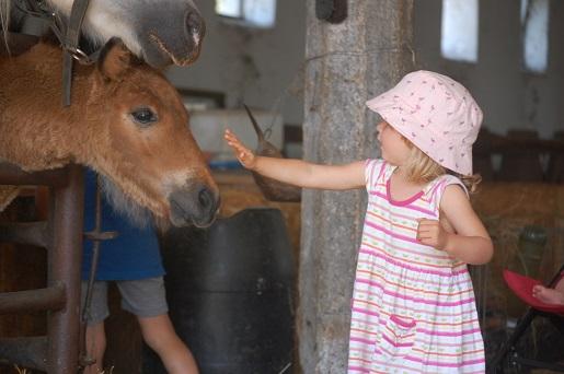 Węgry gospodarstwo koło Kis-Balaton - atrakcje dla dzieci
