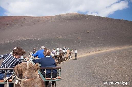 Wielbłądy atrakcje Lanzarote z dzieckiem