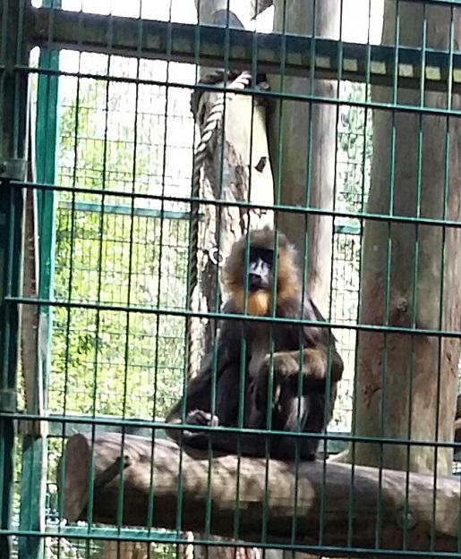Zoo w Gdańsku 1234