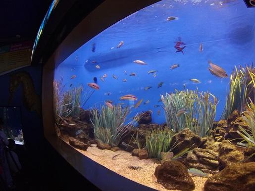akwarium Barcelona opinie oceanarium
