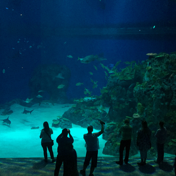 Błękitna Planeta rodzinne atrakcje Kopenhaga