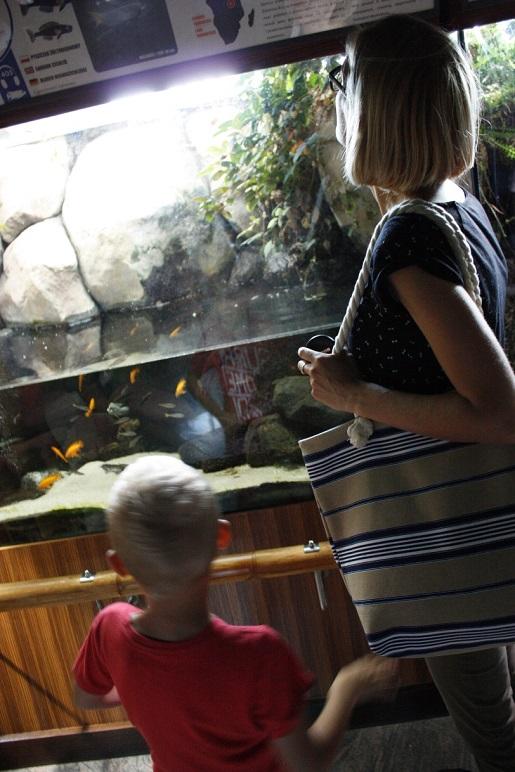 akwarium Gdynia 8776 oceanarium