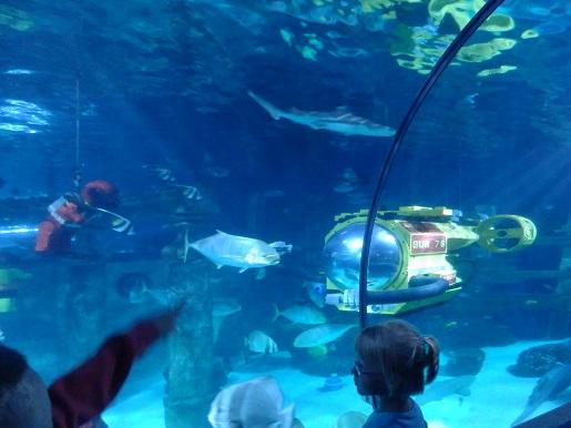 atrakcje akwarium dla dzieci