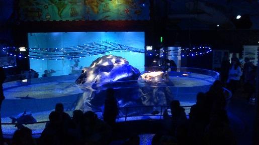 Akwarium Praga - atrakcje dla dzieci