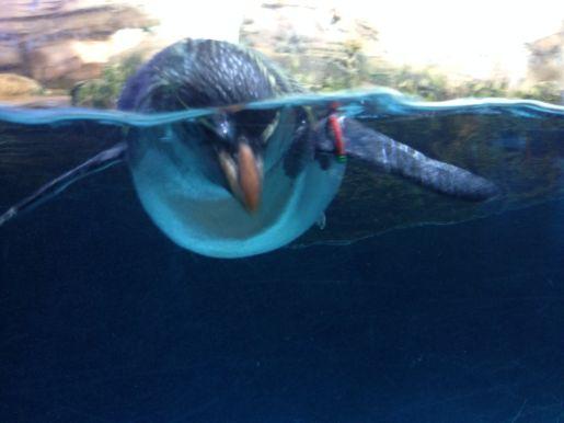 oceanarium Berlin atrakcje dla dzieci