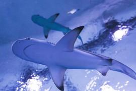 aquapark z rekinami nad morzem opinie Reda