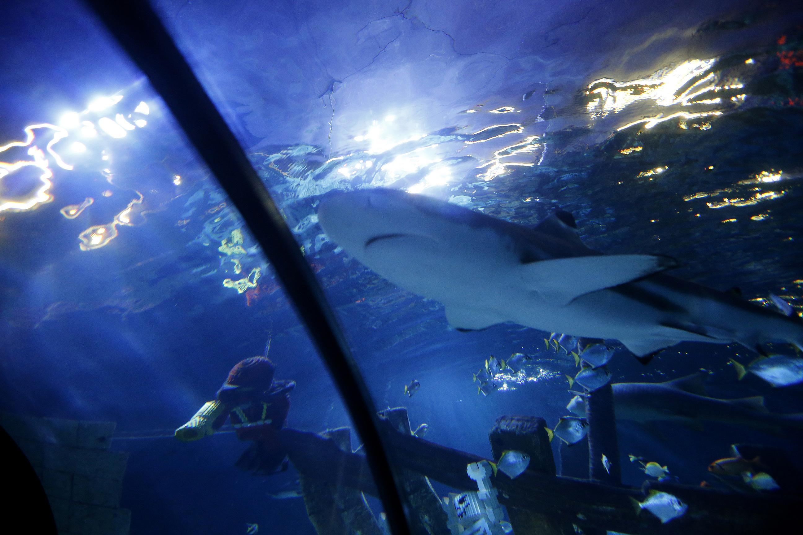 Sea Life Atlantis Legoland Billund