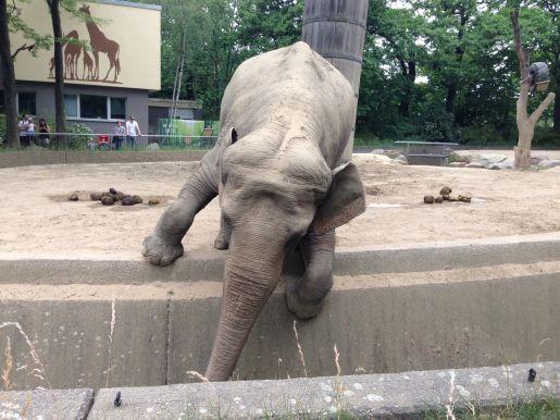 zoo Berlin Niemcy rodzinne atrakcje