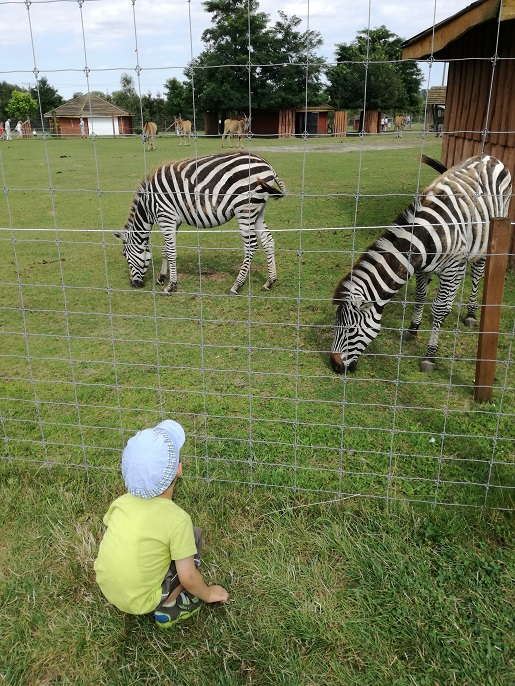 Zoo Borysew Safari z dzieckiem