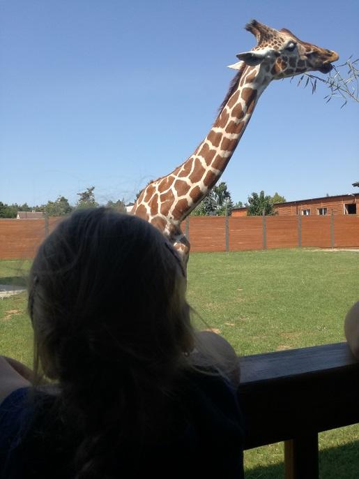 Borysew Zoo Safari z dzieckiem