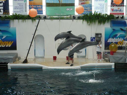 rodzinne atrakcje Warna delfinarium opinie