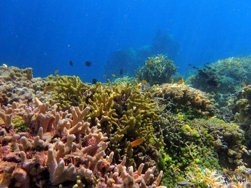 Coral Garden Filipiny atrakcje dla dzieci