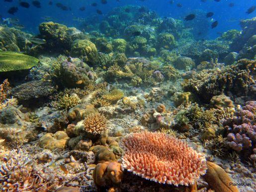 Ogród Koralowców Filipiny rodzinne atrakcje